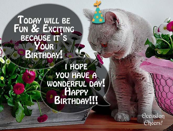 birthday-wishes-cute-animals-cat-09